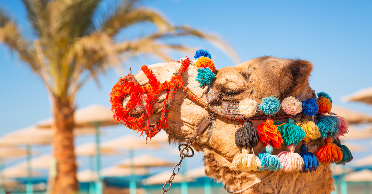 Dovolenka Hurghada a Safaga